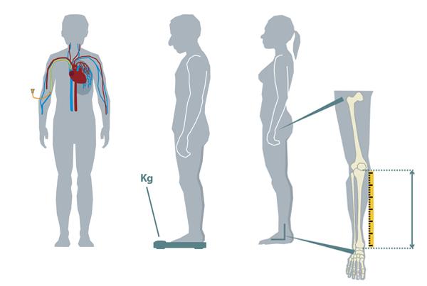 Medische illustraties